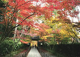 kyoto_momiji